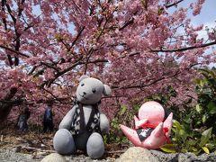 小積の河津桜と瀬戸内ジャムズガーデンに行く