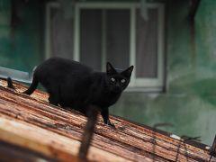 初めての台湾  猫拳的緩慢巡回記〈1〉スタートは1人旅 ♪