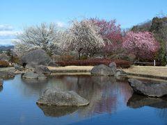 みかも山・万葉庭園のウメ_2017_白、紅、ピンクのウメが揃って見頃でした。(栃木市・佐野市)