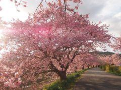 2017年早春 宿泊費2泊5日の旅 一足早い春の花を求めての旅 【みなみの桜まつり】