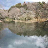 ご近所さんぽ : 座間谷戸山公園で里山散歩