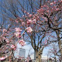 梅*umeお散歩♪【大阪城公園〜神戸・岡本公園&保久良梅林】