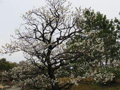 2017春、梅の花咲く徳川園(1/5):3月5日(1):鉢植えの紅白梅、牡丹園、新国色、島津紅、木瓜、白加賀、メジロ、トクサ