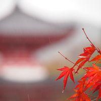初の姫路、大阪は2回目、京都は何回目? 行ってきました秋の関西旅行 その4