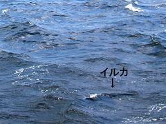 2017弥生  かごんまいろいろ ◆フェリーなんきゅう初乗船でイルカに会ったどっ!