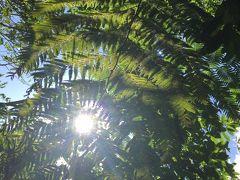 #10 西表島 自然満喫の旅 ④ 竹富島へ