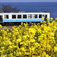 早春の伊予灘・西伊予地方を巡る旅 ~黄色い春色の風景に包まれた、伊予灘の「菜の花街道」に訪れてみた~