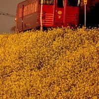 早春の伊予灘・西伊予地方を巡る旅 ~伊予灘の「菜の花街道」からの夕日を見に訪れてみた~