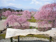 三重県の菅原神社、鈴鹿の森で梅の鑑賞とパラミタミュージアム