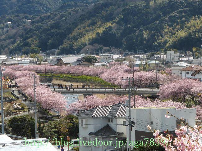 『くるまの桜』の続きです<br />『涅槃堂』の上にある『桜見晴らし台』ここからの眺めは<br />良いかも・・・・<br />『涅槃の桜』『峰小橋』ここら辺の桜は綺麗です<br />『峰小橋』からUターンで戻ります・・・