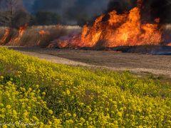 早春の草原に紅蓮の炎が逆巻く ~渡良瀬遊水地のヨシ焼き~