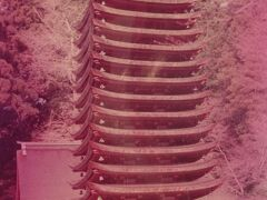 1978年(昭和53年)4月 奈良の旅(義仲寺 宇治神社 興聖寺 長谷寺 談山神社 山の辺の道)