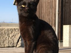 ねこ島探訪記□17年早春~岡山・真鍋島~素朴な島の仲良しネコさん