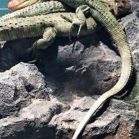 サンシャイン水族館-4 水辺の旅:トカゲ/カエルなど ☆淡水に棲む生物多く