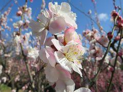 2017春、東山植物園の梅と河津桜(4/8):3月10日(4):ビオトープ、木彫作品・くわがた、思いのまま、冬至