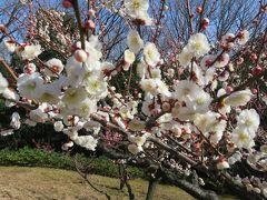 2017春、東山植物園の梅と河津桜(5/8):3月10日(5):梅林(梅の丘)遊歩道、思いのまま、紅千鳥、冬至、森の関、寒紅梅