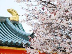 ひとりお花見部 2009 禅居庵夜桜コンサートなど 初めてのデジイチでほとんど失敗   京都詣でNo.13