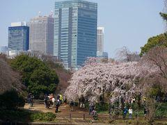 """東京新宿・約65種1300本の桜の名所""""新宿御苑""""を訪れて"""