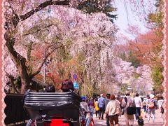 角館のさくら劇場・・・しだれ桜と、ソメイヨシノの並木道と、ライトアップも~~欲張りだわっ!(2016年の桜)