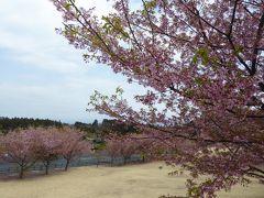 春の優雅な伊豆♪ Vol.10(第2日目) ☆伊豆高原:「伊豆ぐらんばる公園」 愛犬と一緒に遊ぶ♪