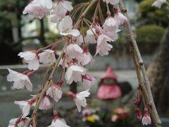 20170329今日の鎌倉散歩道・桜を探してあちこちと