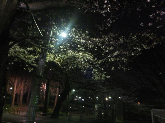 善福寺川緑地公園に夜桜を観に行ってきましたが、今年(2017年)は桜の開花が遅くて満開ではありませんでした。