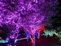 春の優雅な伊豆♪ Vol.19(第2日目) ☆伊豆高原:「グランイルミ」妖艶な夜桜は美しい♪「ウブドの森」夜食ラーメンをほっこりと頂く♪