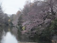 2017年の桜観賞・・・・・②武蔵関公園
