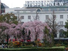 山下公園の美しいシダレ桜!!