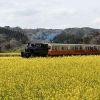 満開の菜の花と小湊鐵道