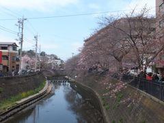 横浜の桜の名所「大岡川」、4月2日に行きましたが、満開にはまだ早かった・・・。
