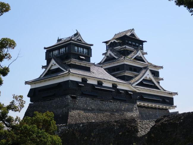 JALの「どこかにマイル」を申込み「徳島・北九州・熊本・宮崎」中から「熊本」に行先が決定し日帰りで行ってきました。妻の実家がある熊本に縁があるようです。これから復旧工事の為、しばらく姿を見る事が出来なくなる熊本城と水前寺公園を散策しました。天気にも恵まれ、熊本城では期間限定で解放された場所を見学できたり、帰りの飛行機ではファーストクラスに座る事が出来たのでとても良い1日となりました。<br /><br />旅程<br />羽田⇒熊本 JAL625(エコノミークラス)<br />熊本城⇒桜の馬場⇒熊本市役所⇒水前寺公園<br />熊本⇒羽田 JAL634(クラスJ)<br /><br />