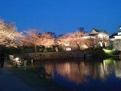 第八回福岡城さくらまつりの夜桜見物に孫と行って来ました。開花が遅くて4月9日まで延長してました。