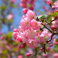鎌倉で春を楽しむ、開花状況(2017年4月4日現在)