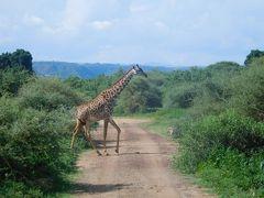 タンザニア2017旅行記 【3】マニャラ湖国立公園2