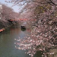 梅は咲いたが桜はまだか? 岐阜県の水都「大垣」で船の上からお花見です