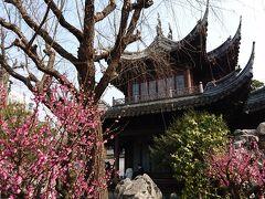2017年2月 上海旅行4日目♪豫園でお花見〜焼き小籠包ランチ〜帰国♪