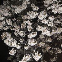 2017年の桜観賞・・・・・�善福寺川緑地公園夜桜2