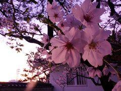 桜咲く広島(1)-出発~福山・鞆の浦-
