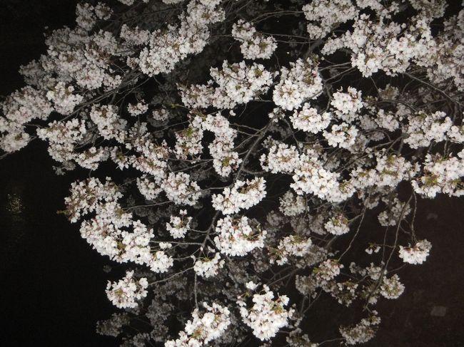 先週(2017年の桜鑑賞・・・・・①)に引き続いて善福寺川緑地公園に夜桜を観に行ってきました。<br />先週行った時は殆ど咲いていませんでしたが、今日(4月6日)は満開に咲いていました。