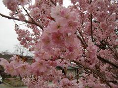 桜の京都のはずだったのにぃ~ 2017バージョン 2日目