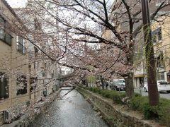 桜の京都のはずだったのにぃ~ 2017バージョン 5日目