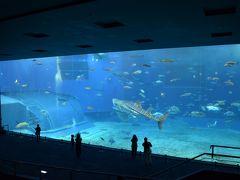 2017  春 沖縄  ファミリー旅 2日目  美ら海水族館   フジはいなかった・・・