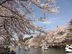 桜三昧 in 東京