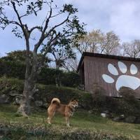 ワンコと旅行♪桜を求めて伊豆高原から修善寺までの旅【前編】