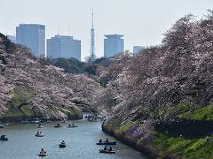 東京桜散策 千鳥ヶ淵~上野公園