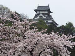 国宝犬山城と桜&リトルワールドのサーカス