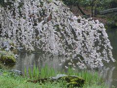 京都('17 花見)