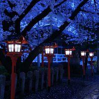 京都 桜めぐり〜六孫王神社、本法寺、水火天満宮、上品蓮台寺、千本釈迦堂