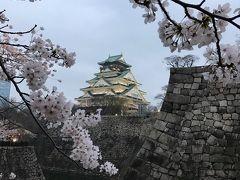大阪城の桜満開